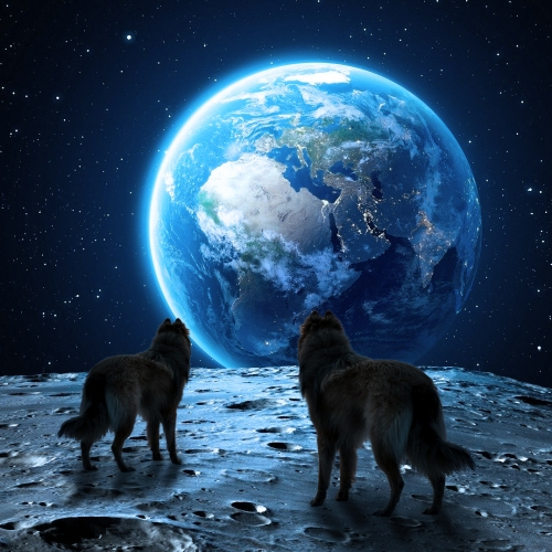 wolves-on-the-moon