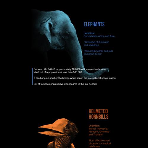 WildforLife - UNEP