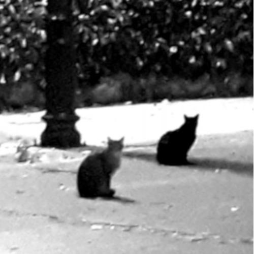 cats creepy
