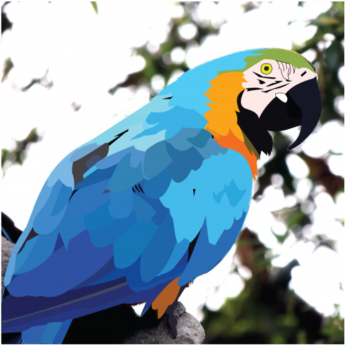 Parrot Vector Art