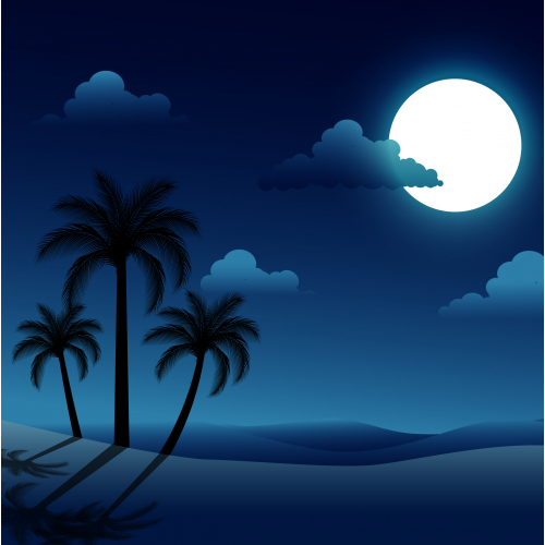 night sky with palm trees