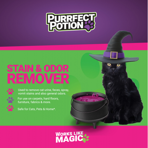 Purrfect Potion