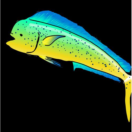 Mahi-mahi fish (fabuleuseplanete biodiversity)