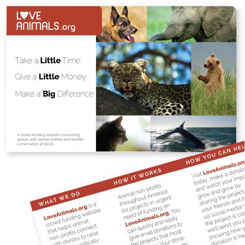 Love Animals Post Card