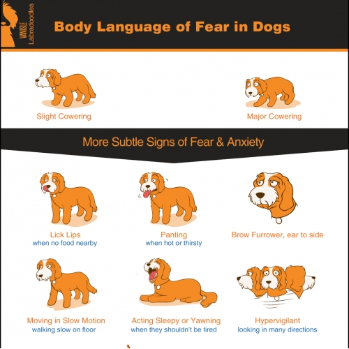 Dog Behaviour Infographic
