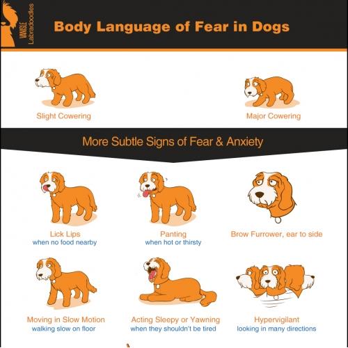 Dog Behaviour Infographic