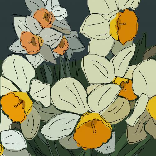 Jonquils/Daffodils