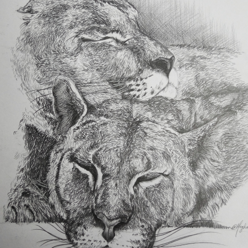 2 Mountain Lions Sketch