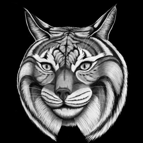 Bobcat Drawing