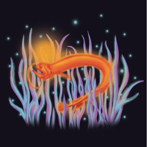 Deep Sea Dragon Fish