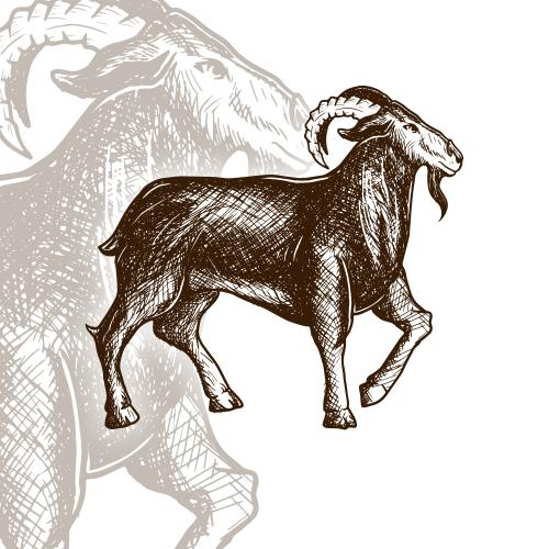 Vintage Goat Design