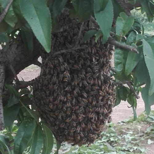 Bee Kingdom