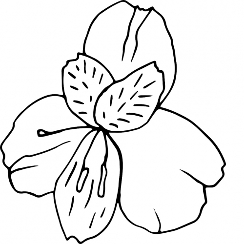 Single Elegant Lily Flower bud in doodle style