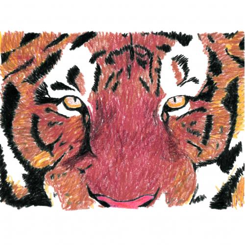 monotone tiger