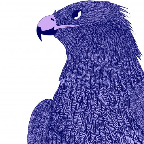 monotone eagle