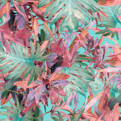 Tropic Foliage