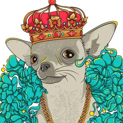 chihuahua the king