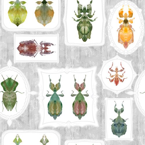 Entomological collection